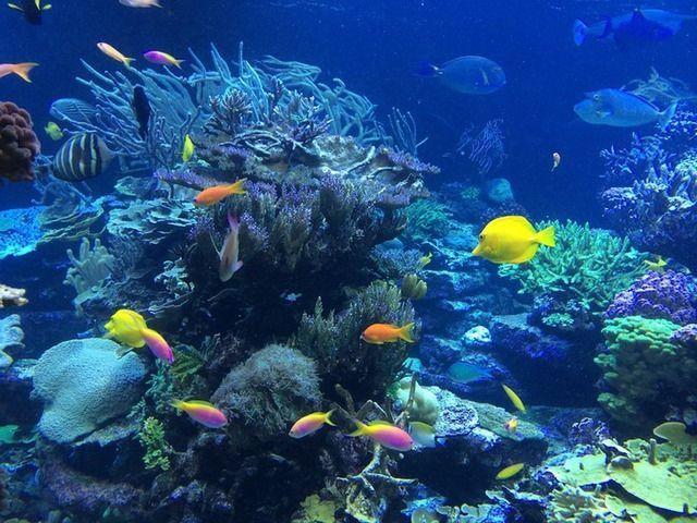 Ägypten Unterwasserwelt Schnorcheln