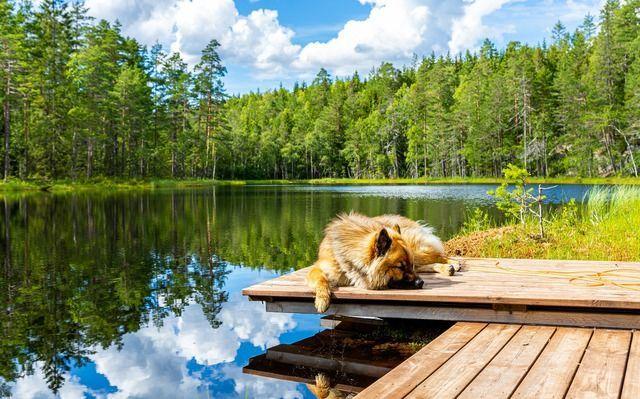 Deutschland See mit Hund