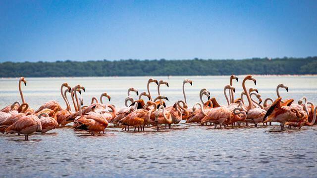Flamingos Ibiza