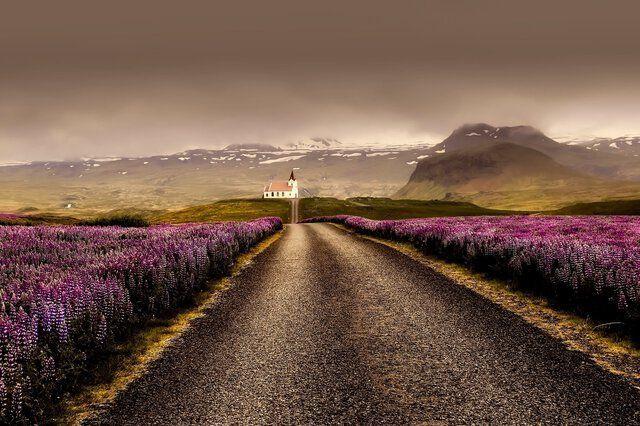 Blühende Landschaft Island