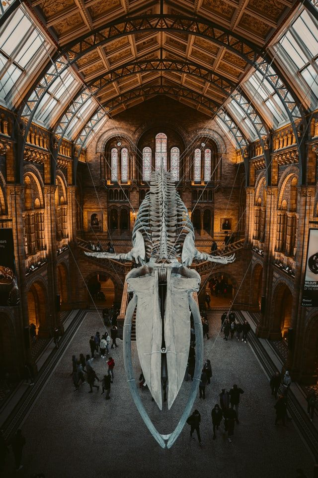 Visit the Stunning Natural History Museum