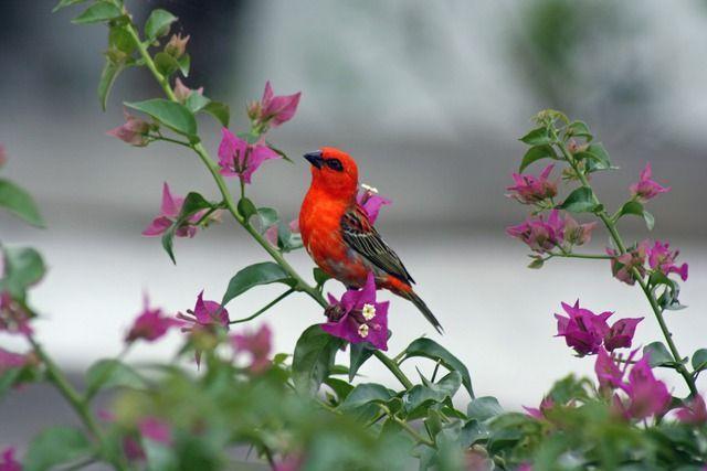 Vogel Mauritius