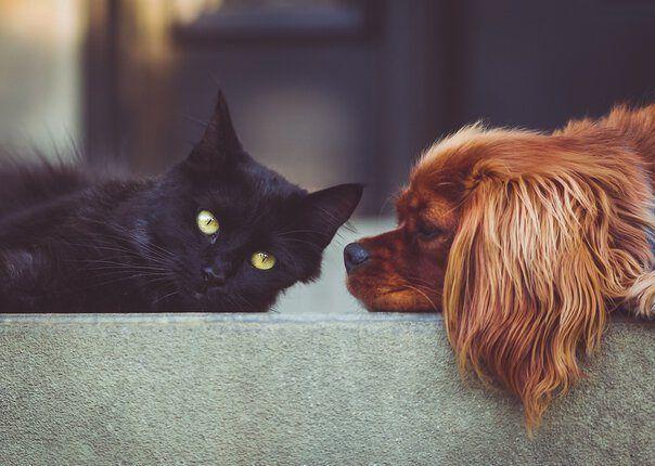 Reisevorbereitung Haustiere