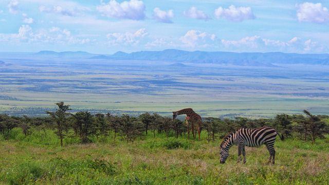 Reitsafari Afrika