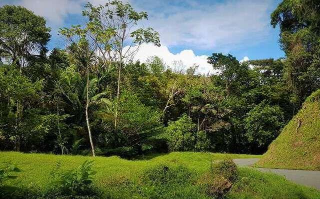 Regenwald Tobago