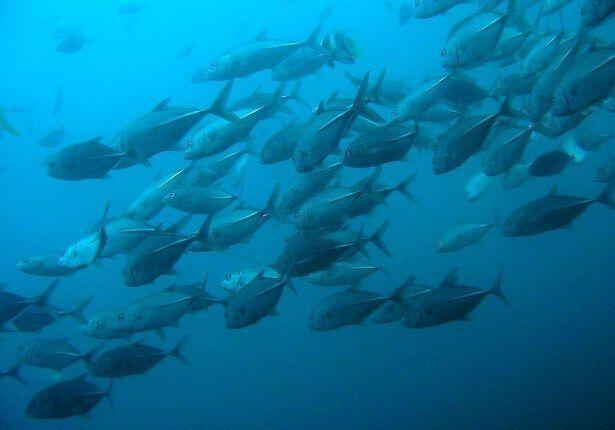 Fische Thailand