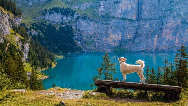 Wanderurlaub Hund