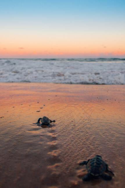 Zakynthos Wasserschildkröten