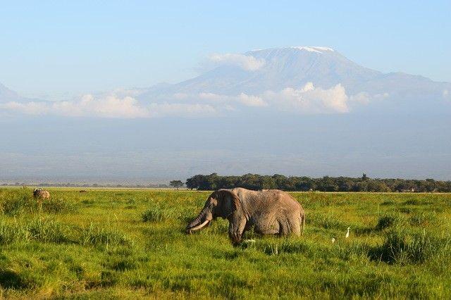 amboseli mt. kilimanjaro elephant