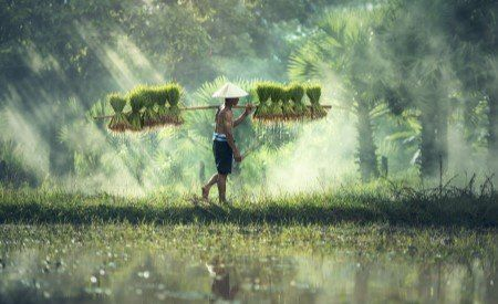 Vietnamese man carrying grass