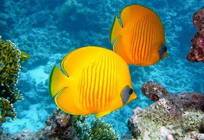 Great Barrier Reef Australie