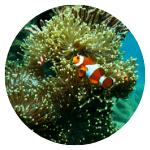 barrier-reef