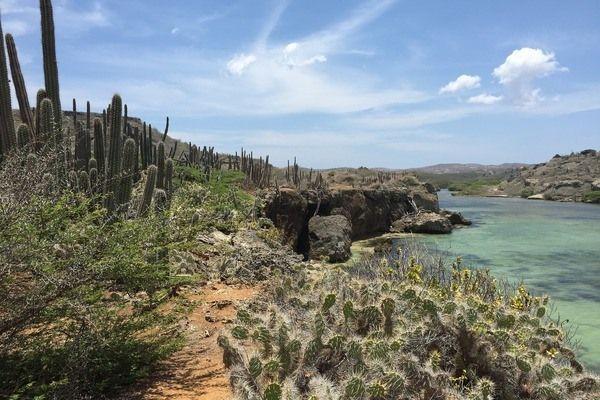 Curacao cactussen