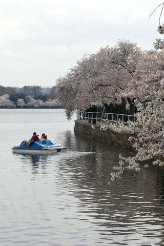Kid Friendly Things to Do in DC - Paddleboat in Tidal Basin