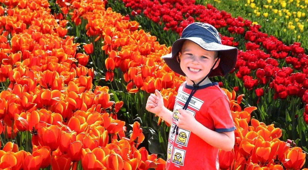 Enfant Champ Tulipes