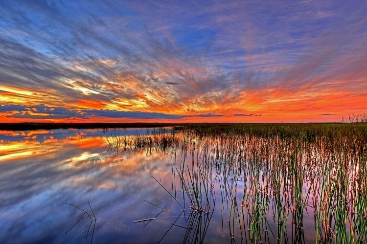 Parc National Everglades