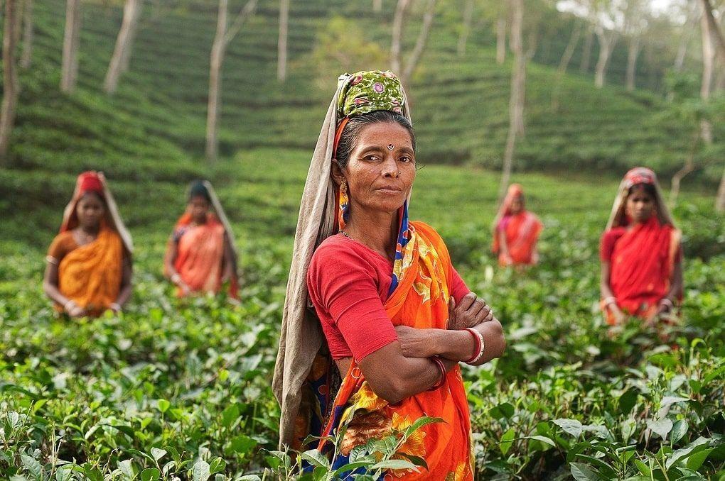 Femmes plantation Inde
