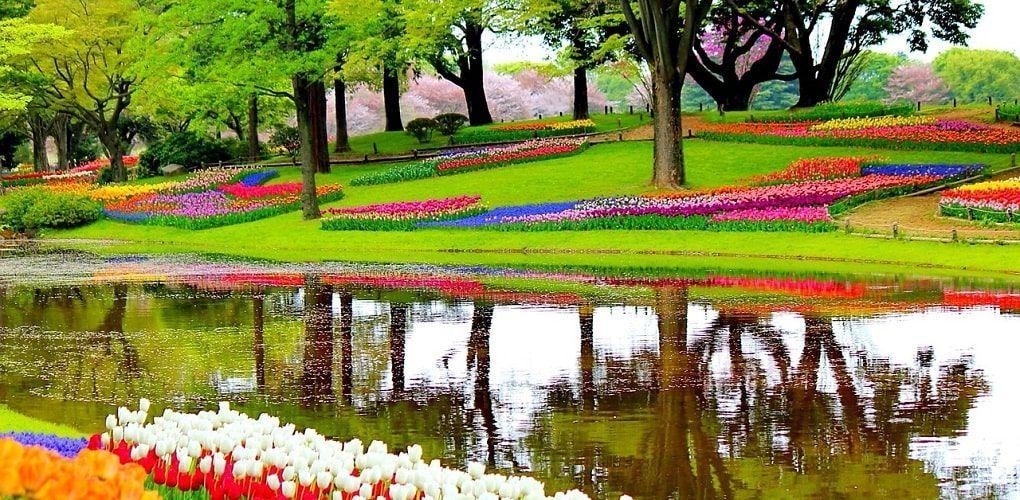 Parc Keukenhof Amsterdam