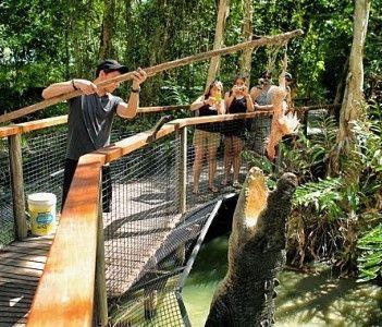 hartley's crocodile adventures cairns