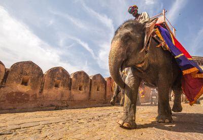 Man op olifant