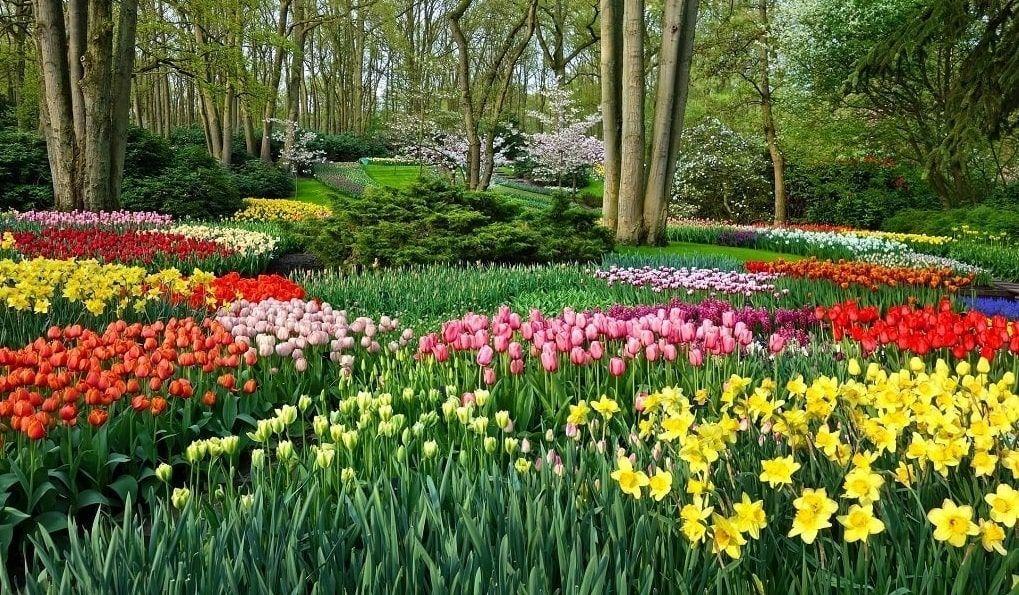 Jardin Parc Keukenhof