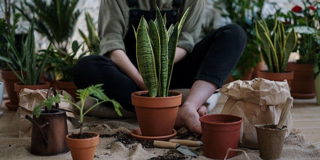 Jardinage intérieur