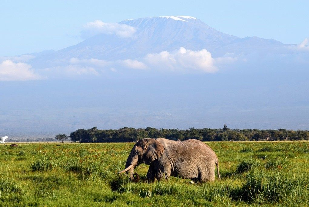 Elephant in front of Mount Kilimanjaro at Amboseli National Park in Kenya