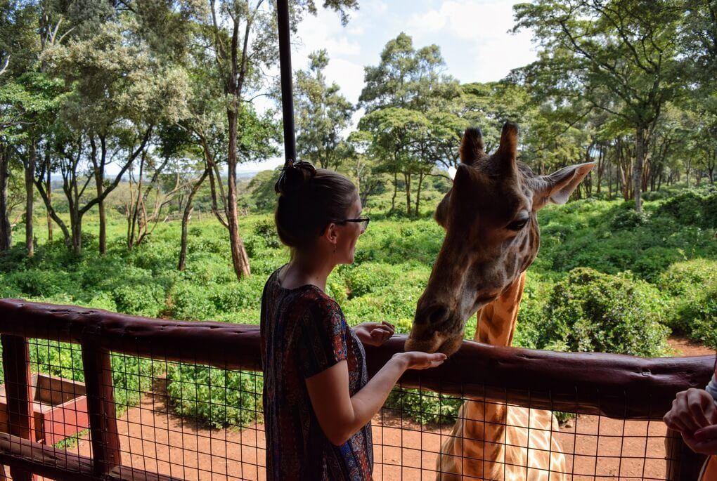 Feeding giraffe at Giraffe Centre in Nairobi