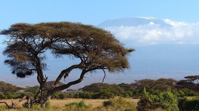 Kilimandjaro Parco Amboseli