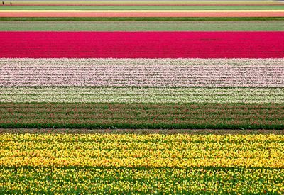 The Netherlands 1
