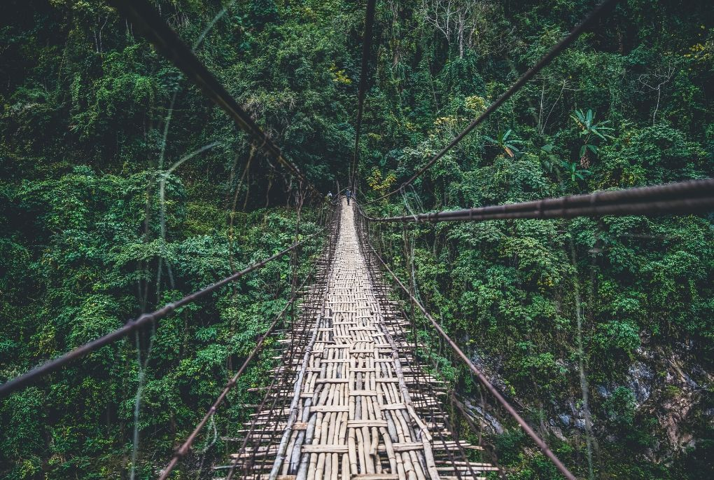 Bridge in green lush forest in Northeast India