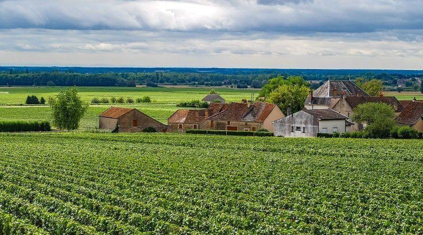 Paysage Vignes Bourgogne