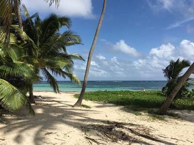 Quand partir a la Martinique