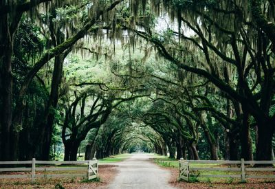 Travel Guide to Savannah Article Cover