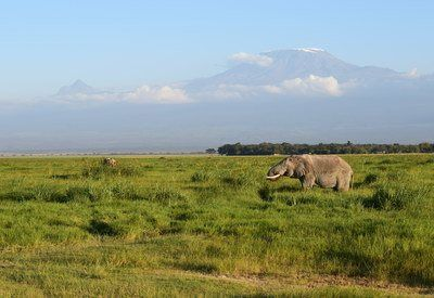 Related Article Visit Amboseli National Park