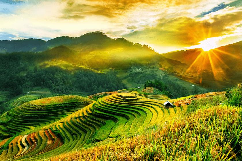 rice-fields-vietnam
