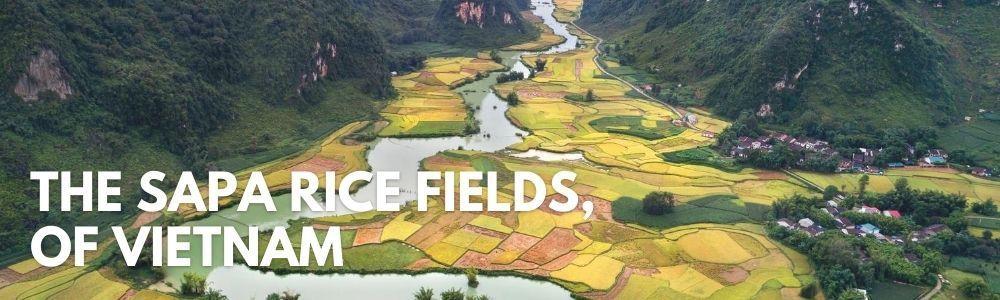 sapa-rice-fields