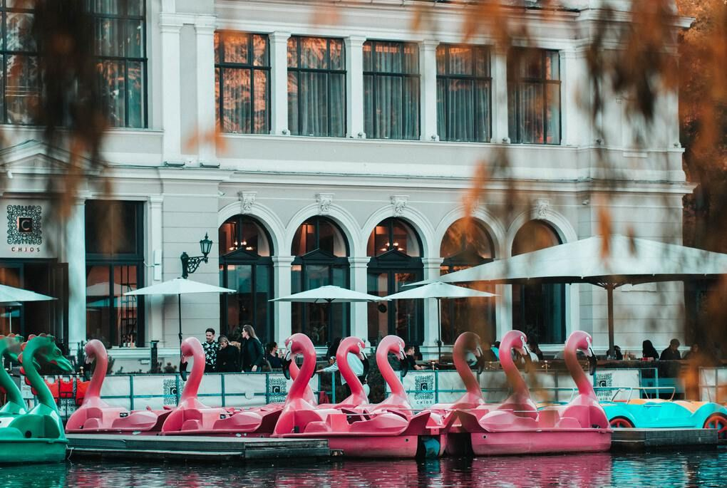 Pink flamingos in the water in Cluj-Napoca, Romania