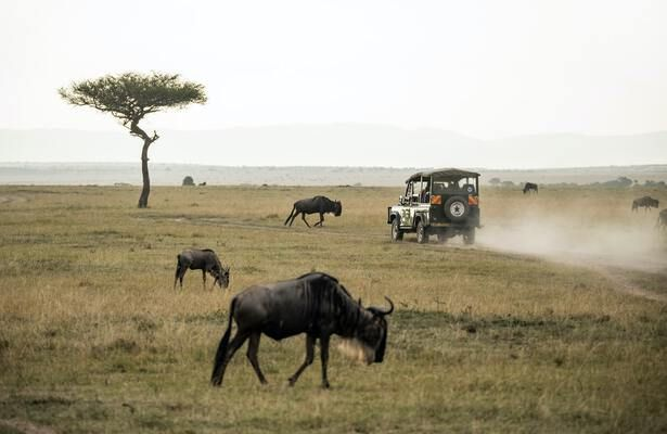 Go on Safari in Kenya for an Unforgettable Experience