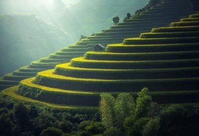 thailand green fields