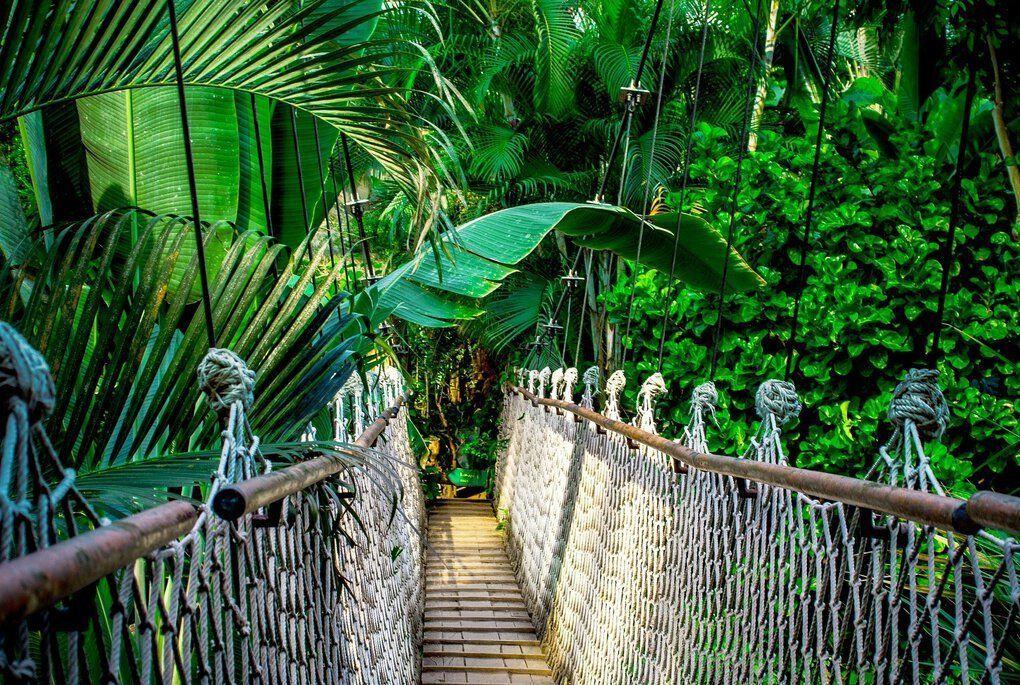 Suspension bridge in the Amazon Rainforest