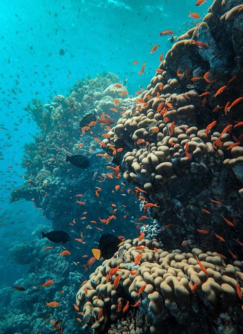 Coral reef and fish underwater in the Red Sea