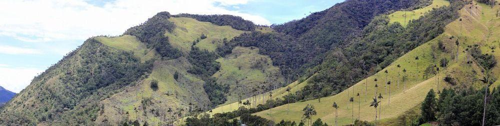Vallée Cocora en Colombie