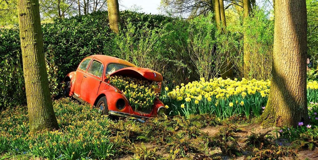 Volkswagen Beetle Keukenhof