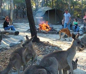camping at walk about park australia